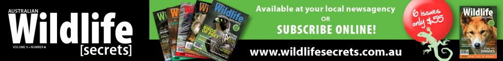 Australian Wildlife Secrets magazine online subscriptions